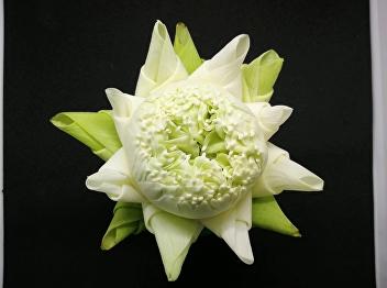 OAC Disseminates Lotus Petals Folding with Thai royal pattern on Thai PBS